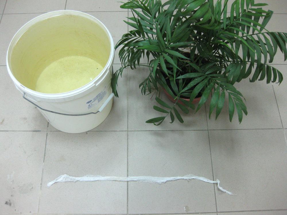 Как поливать растения во время отпуска?